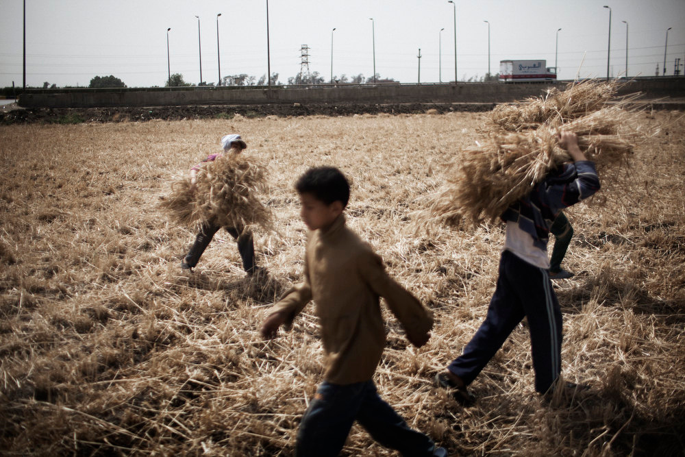 . Egyptian children carry crops in the fertile Egyptian Delta region of Menufiya, in the city of Banha, 50 kms north of the capital Cairo, on May 28, 2012. Support for ex-prime minister and presidential candidate Ahmad Shafiq is strong in a region where former presidents Anwar Sadat and Hosni Mubarak were born and where their popularity his high, in contrast with a staunch opposition to the Muslim Brotherhood\'s candidate Mohammed Mursi.  MARCO LONGARI/AFP/Getty Images