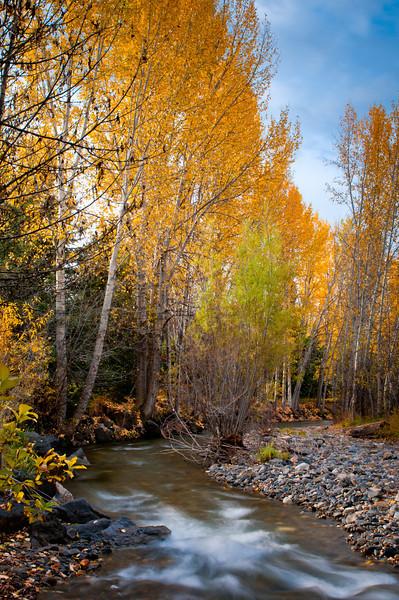 Fall Idaho-8.jpg