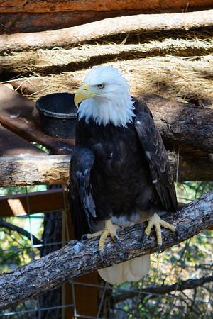 Cheyenne Mountain Zoo 8/16/15