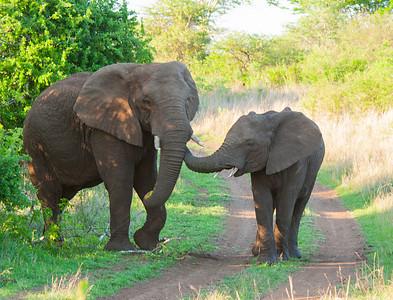 South Africa Safari 2012
