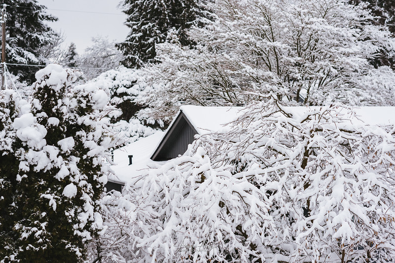 SnowWedgwoodFeb2019-11.jpg