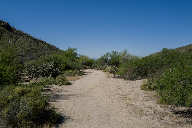 Mar 17 AZ-1050151.jpg