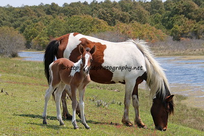Marguerite's Filly