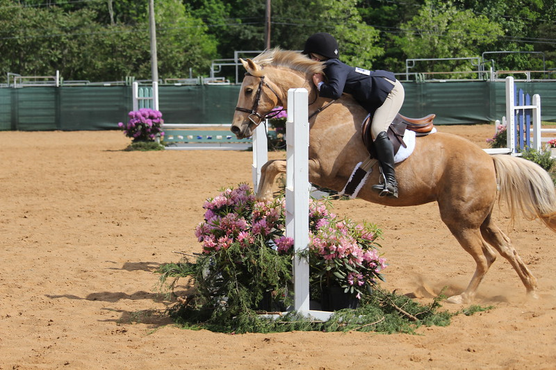 PONY EQ/HUNTER