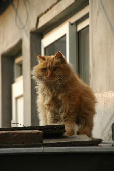Fluffy Cat - Beijing, China