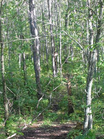 Swenson's  Bear Hunt 2004