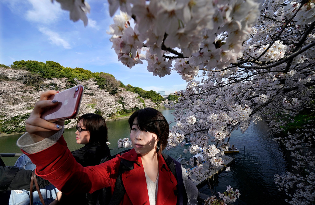 . A woman takes a picture of the cherry blossom at Chidorigafuchi in Tokyo, Monday, March 26, 2018. Japan\'s famous cherry blossoms have reached full bloom in Tokyo as spring-like weather descends on the nation\'s capital.(AP Photo/Shizuo Kambayashi)