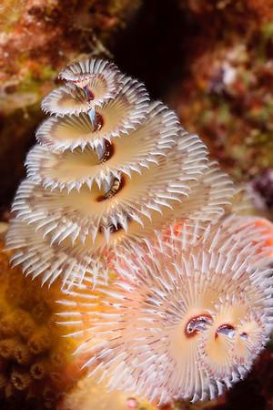 Worms of Bonaire