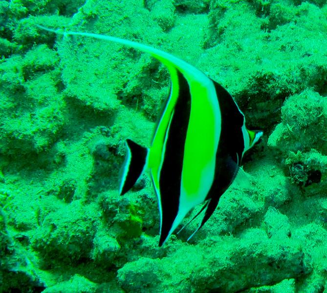 Hawaii diving - 046-2.jpg