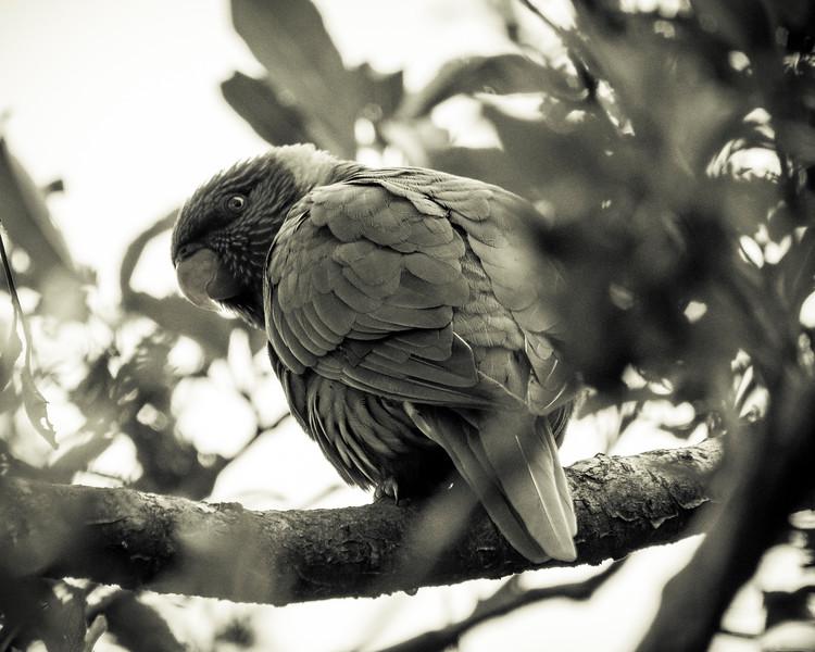 121818  birds  _15.JPG