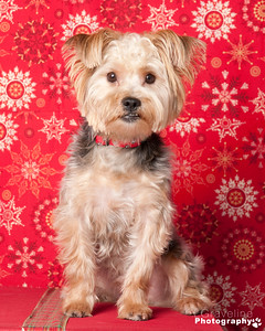 Bark & Fitz Xmas 2014 - Walk-In