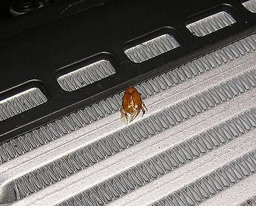 A close-up reveals this bug's final resting place -- a victim of the imfamous intercooler.