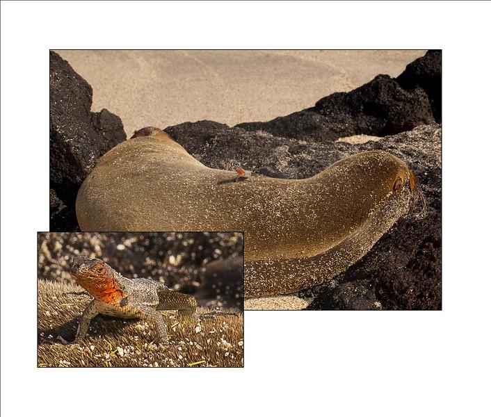 BLURB PAGE - 10X8 - EXACT FIT - 8.46 X 9.95-lava lizard insert.jpg