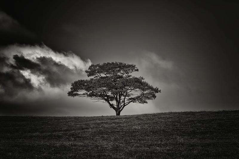 Lone Tree, Milford