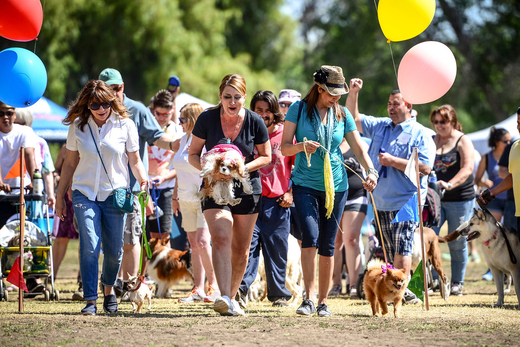 . Dog enthusiasts attend the second annual PAWSAPALOOZA dog walk and festival at Woodley Park in Van Nuys on Sunday, May 4, 2014.    (Photo by David Crane/Los Angeles Daily News)