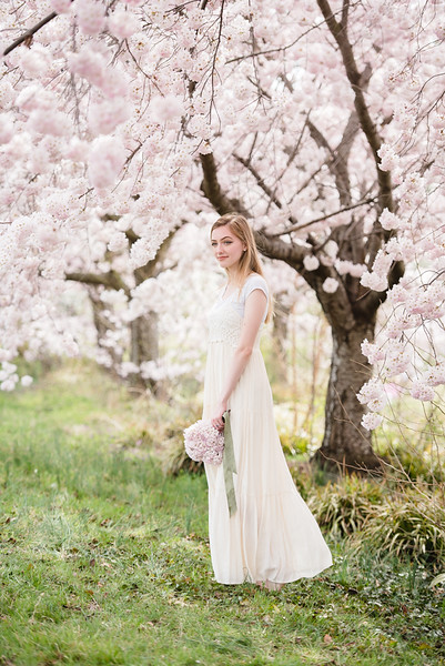 Cherry Blossoms (143 of 182).jpg