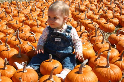 Fall Fun - Pumpkin Patch