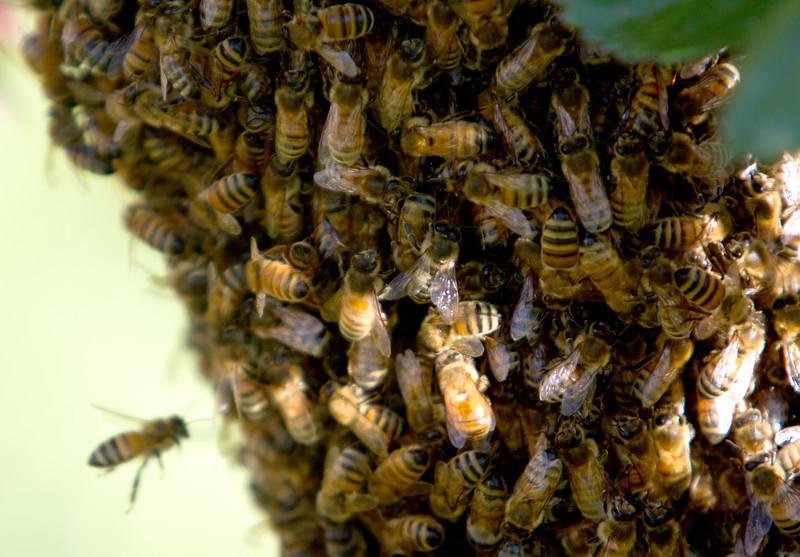 swarm_052214_016.jpg