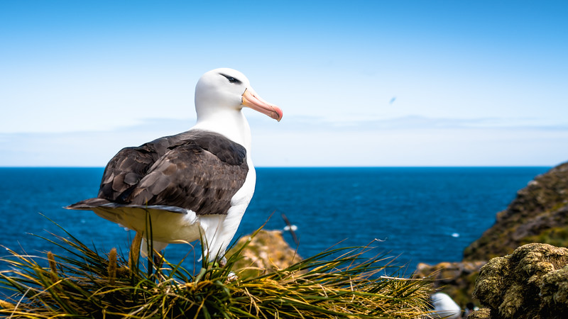 Albatrossbg-0763.jpg