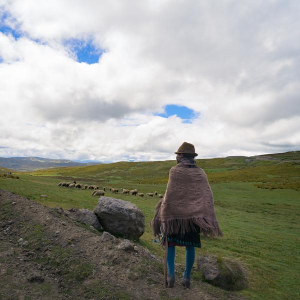 Ecuador Mountain Sheepherder.jpg