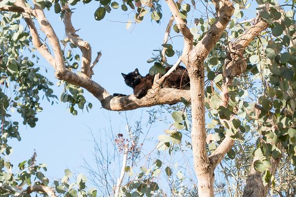 Cat in Tree February 2017