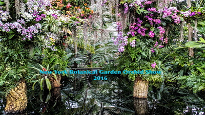 2016 NYBG Orchid Show