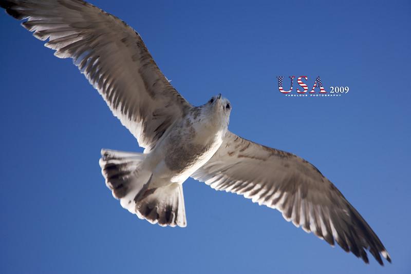 2009-01-26 at 15-48-15 - IMG_2341.jpg
