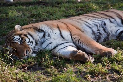 2010 TIGERS