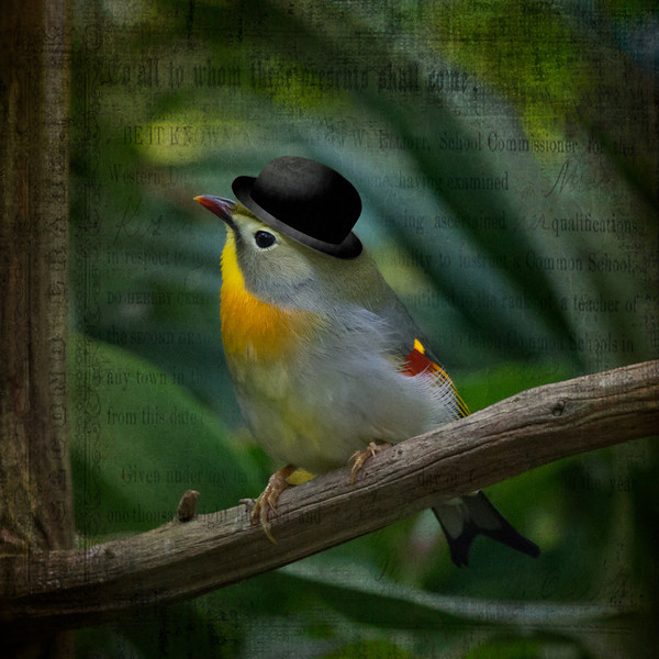 bowlerbird.jpg