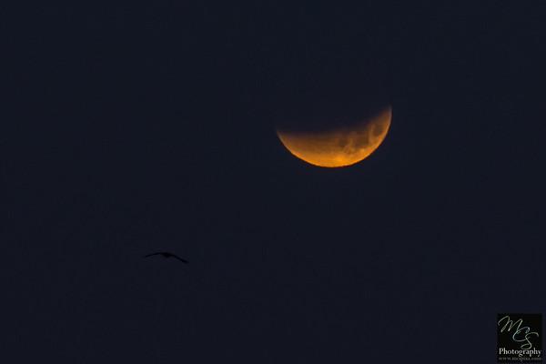 2018 Supermoon Eclipse 1.31.18