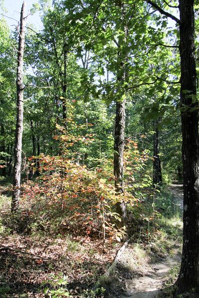 20160918-Ponca Arkansas - Hideout Hollow Trail-26.jpg