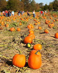 Huber Winery Pumpkins