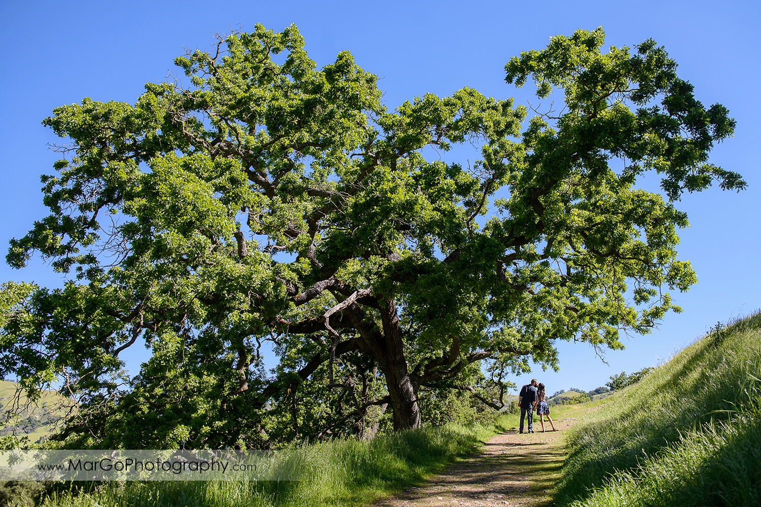 woman in blue dress and man in blue shirt kissing under big oak tree during engagement session at Sunol Regional Wilderness