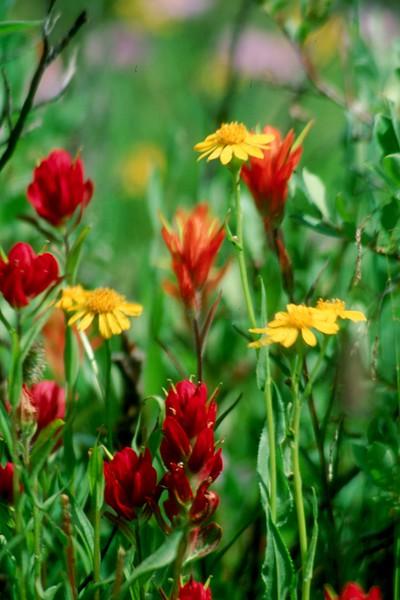 amh FLOWERS (1113).jpg