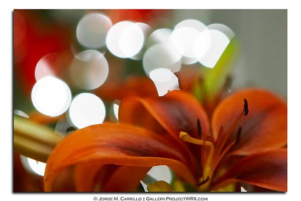 Color pics - web optimized
