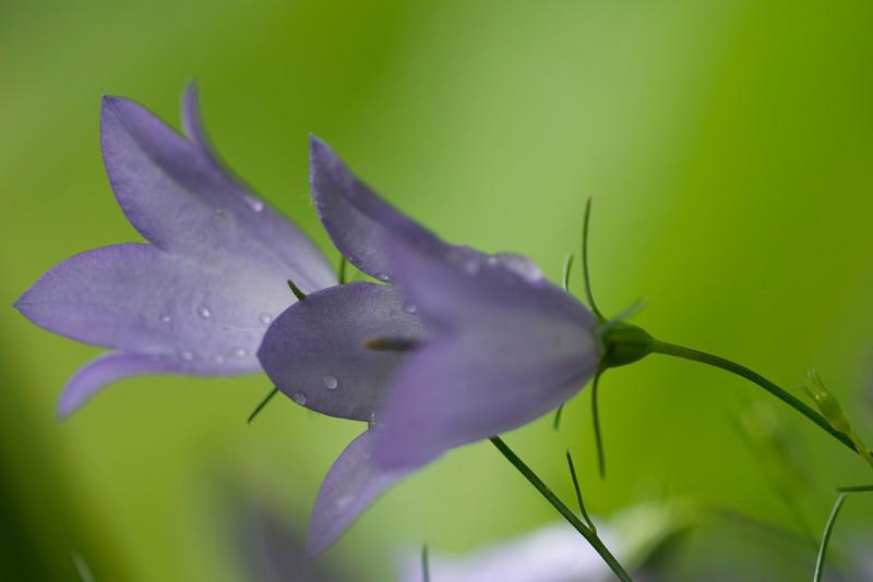 Flowers_0865.jpg