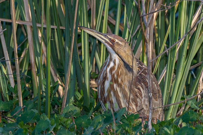 Brazos Bend Birds