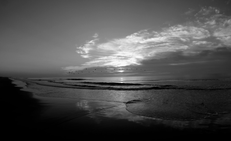 SCOPe_Huntington Beach State Park OCT 2012_5 B&W.jpg