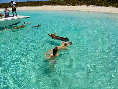 bahamas-swimming-pigs9.jpg