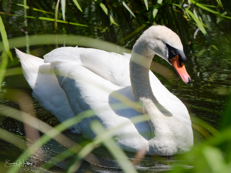 020716_London Wetlands_085.jpg