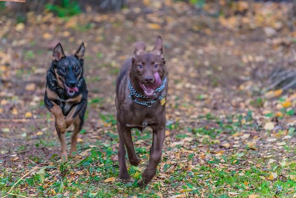 Atticus and Scout  - Nov. 2015