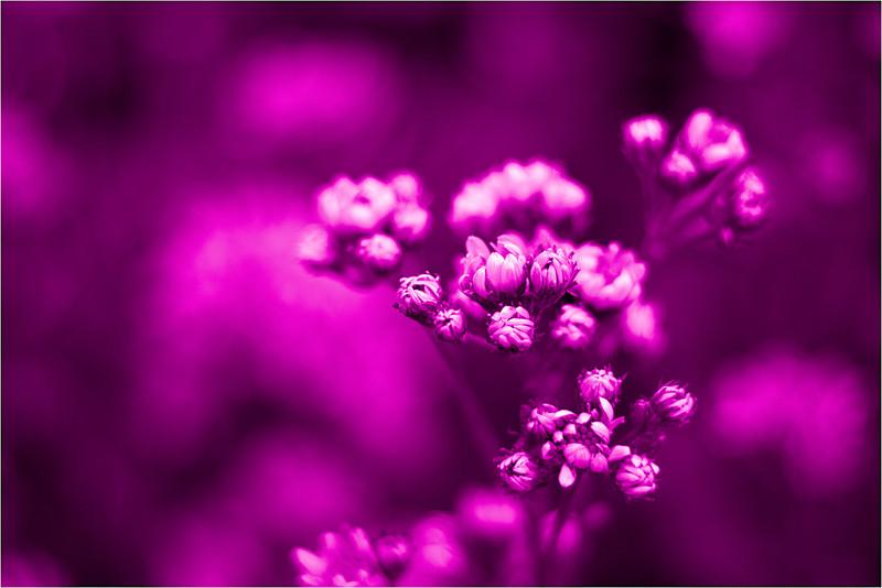 20111015_Flower8.jpg
