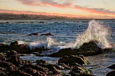 Asilomar Beach Pacific Grove 2014