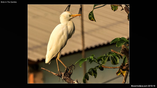 Birds In The Gambia - Slideshow