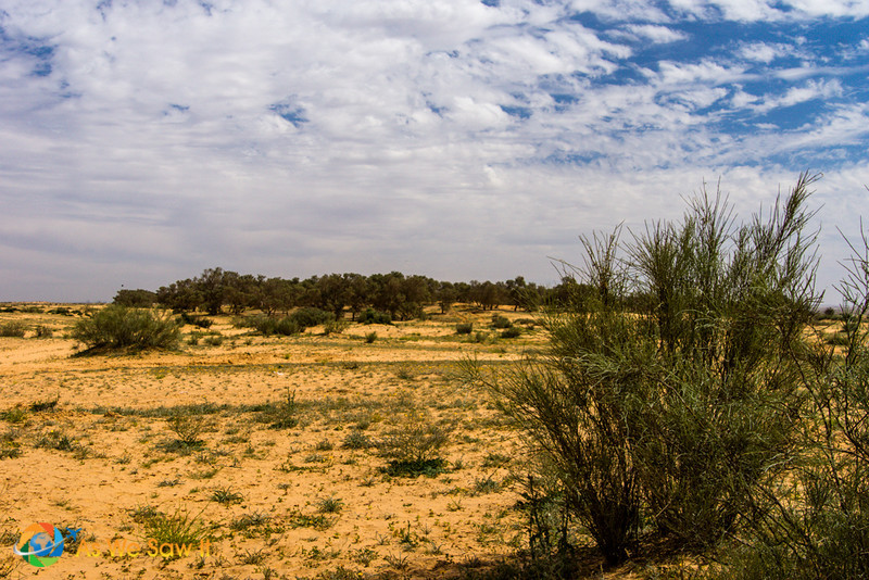 Desert-of-Zin-0632.jpg