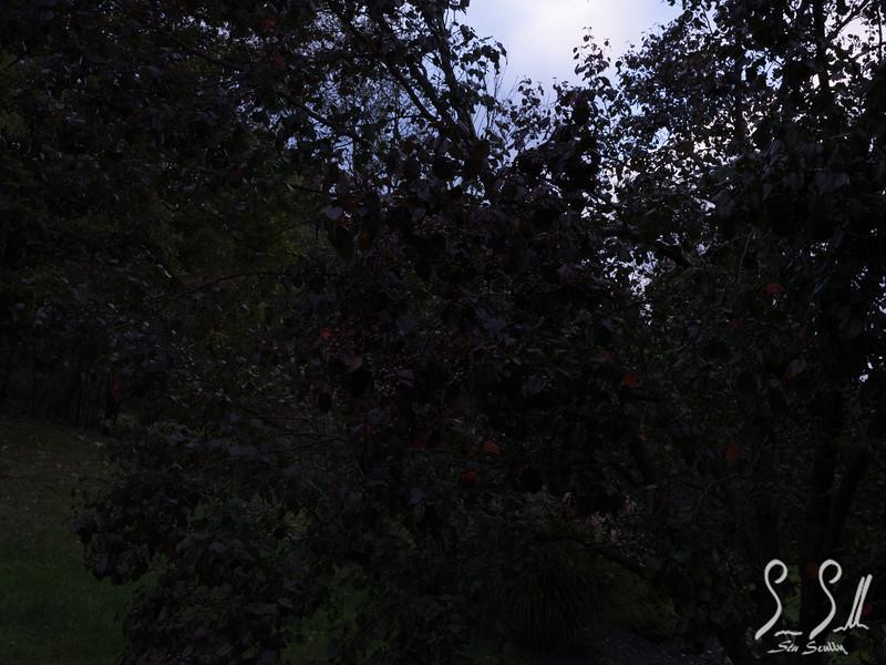 SOOC- tree.JPG