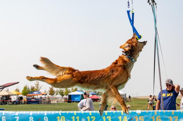 2020 Arapahoe Kennel Club NADD Trials