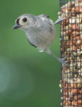 Birds on my Deck