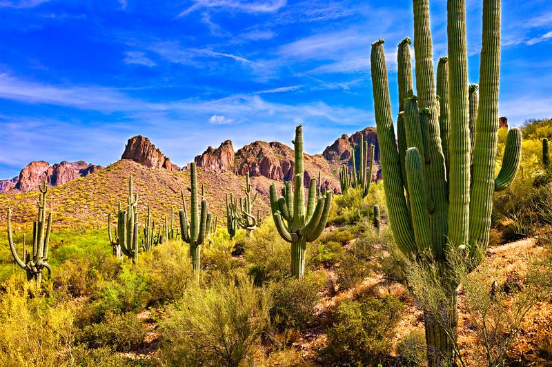 7914 Saguaros
