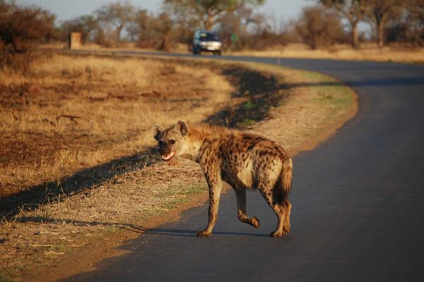 Kruger - Day 11 - Oct 23